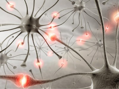 neurones processing information