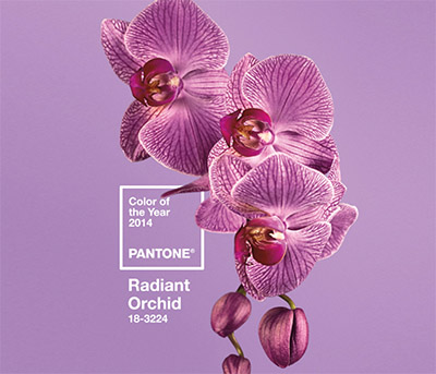 radiant orchid color of 2014 year-2