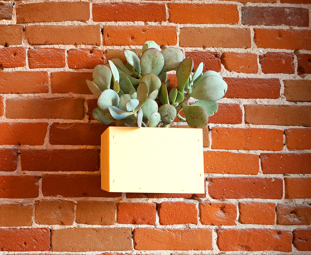 wall planter succulents on wall